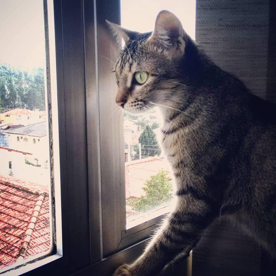 Os pais da gata Bella aprenderam a viajar com o animal de estimação.